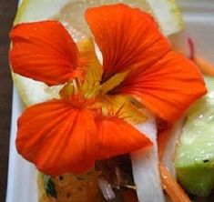 Summer Mediterranean Salad with Citrus, Dates & Nasturtium Flowers | My Halal Kitchen | Inspiration for Wholesome Living | with Yvonne Maffei