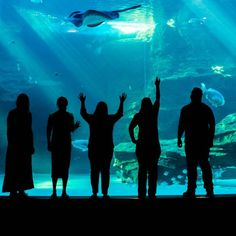 Membership at the Two Oceans Aquarium in Cape Town offers unlimited access Rockhopper Penguin, Ocean Aquarium, O Fish, Buy Tickets Online, Family Events, School Holidays, Cape Town, Oceans, Fish Tank