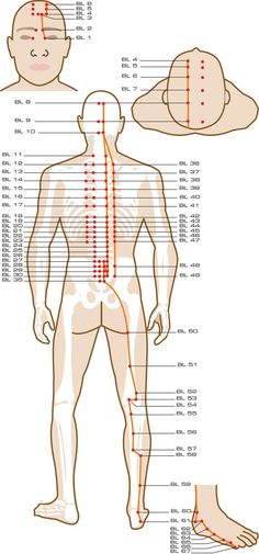 Urinary Bladder Acupuncture Points                                                                                                                                                                                 More