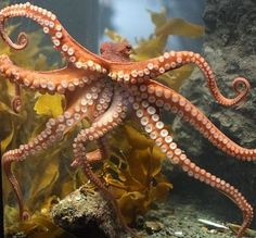 expression-venusia:  Octopus suckers are Expression