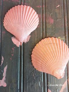 Sea Shell Napkin Rings & Coastal Tablescape
