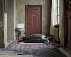 El fotógrafo Helge Skodvin siguió el tránsito de los animales disecados del Museo Universitario de Bergen. Reúne su trabajo en el libro 'A Moveable Beast'