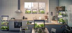 KRYDDA en VÄXAR kweeksets | #IKEA #IKEAnl #indoor #gardening #zaden #kweekset #kweekbak #planten #kweken #groeien #planteninzet