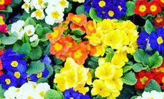 La primavera. Le ossa si asciugano dal freddo, la terra lancia fiori nel cielo come se cercasse un bersaglio invisibile e il tempo torna di nuovo a fare il suo lavoro di incantatore. (Fabrizio Caramagna)