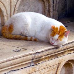 Cat from Dubrovnik, Croatia