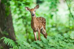 Wildlife, Young, Mammal, Animal, Wild, Safari, Forest