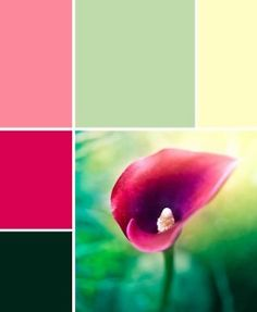 Pink-to-green