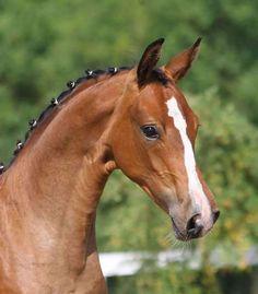 Horse Portraits Photography | marita-munter Kverke hos hest - Blogg