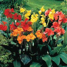 036669506d345f6b88b7c61aeee4c55d--sun-plants-exotic-plants.jpg