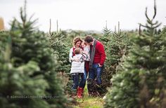 """""""Red sweaters and a Christmas tree farm. Christmas Tree Lots, Family Christmas Pictures, Xmas Pictures, Farm Pictures, Family Photos, Xmas Pics, Christmas Minis, Family Portraits, Christmas Photography"""