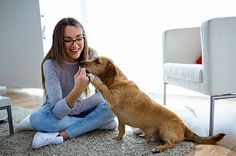 Can you share an apartment with a pet and keep both of you happy? -RealtyTimes #HomeBuyerTips