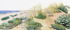 I colori di Conci- Conci's colours: Mediterranean sand dunes- WWF panel
