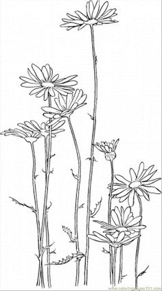 Daisy 5 coloring page - Free Printable Coloring Pages