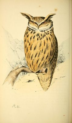 https://flic.kr/p/cVZgFd | n175_w1150 | Coloured illustrations of British birds, and their eggs /. London :G.W. Nickisson,1842-1850.. biodiversitylibrary.org/page/40246160