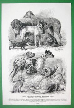 Antique Dog Breeds Print Set of 2 Dog Types Wall Art Decor Animal Art Prints, Bird Prints, Antique Dog Prints, Dog Show Winner, Decor Vintage, Dog Poster, Types Of Dogs, Dog Paintings, Animales