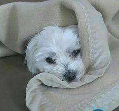 Hunde Foto: Peter und Camillo - Brrrrrrr....ist das kalt Hier Dein Bild hochladen: http://ichliebehunde.com/hund-des-tages  #hund #hunde #hundebild #hundebilder #dog #dogs #dogfun  #dogpic #dogpictures
