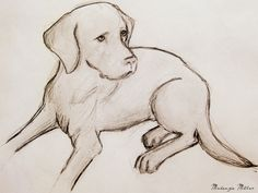 Labrador Drawing by SweetSurrender13