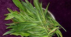 Na początek trochę o właściwościach babki. Babka lancetowata, babka wąskolistn a - gatunek byliny należący do rodziny babkowatych....