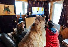 Casal Russo Adotou Um Urso Órfão Há 23 Anos, E Eles Ainda Vivem Juntos