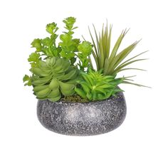 House of Silk Flowers Artificial Succulent Garden in Small Stone Bowl *** You can get more details by clicking on the image.