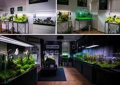 Green Aqua Gallery