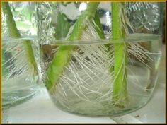 Tomato Plants Propagating Your Tomato Plants - When you think of growing vegetables in your garden, you probably picture planting seeds or transplanting seedlings. But theres a third option: growing veggies from cuttings. Find tips for this here. Growing Tomatoes In Containers, Growing Veggies, Growing Plants, Veg Garden, Edible Garden, Garden Plants, Tomato Plants, Propagation, Cuttings