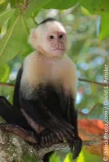 As part of its 2012 promotions, the Frederick Keys minor league baseball team in Frederick, Maryland, has planned a June 22 monkey rodeo, in which capuchin monkeys will be forced into costumes and strapped to dogs who will race around a track at Harry Grove Stadium. The team also plans to host a July 1 dove release, after which the bird used faces the life-threatening task of finding her way home from an unfamiliar location. Click to sign a petition asking them to  cancel these cruel plans