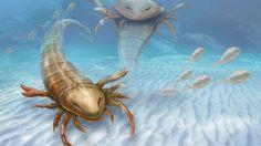 Conhecida como Pentecopterus, a espécie foi encontrada em rochas com cerca de 467 milhões de anos, localizadas no estado de Iowa.