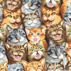 Selfie Cats - Smile for the Camera - Quilt Fabrics from www.eQuilter.com