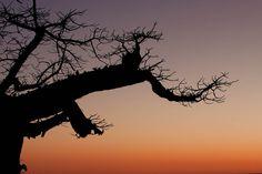 Photograph Sunrise, Kubu island, Makgadikgadi Pan by Ale Muiesan on Description: Botswana, Africa Ale, Sunrise, Africa, Island, Celestial, Photograph, Outdoor, Deserts, Photography