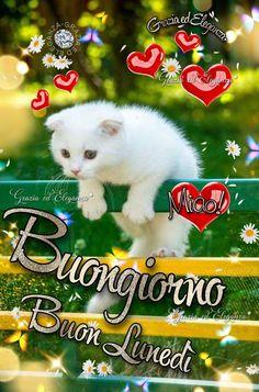 Night, Be Nice, Bom Dia, Bonjour, Italian Greetings