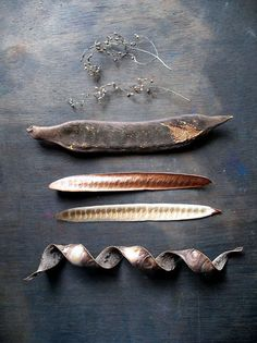 Locust tree seed pods    From~ Skywen ~