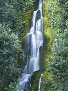 Waterfall, Centennial Gardens, Napier, Hawkes Bay, North Island, New Zealand Photographic Print by David Wall at AllPosters.com