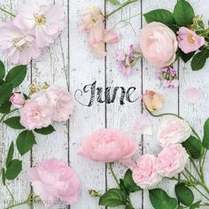 Blush pink roses in June