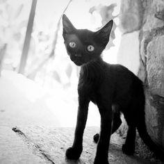 Cat (02) - 20Jul10, Phaistos (Grece) | Flickr - Photo Sharing!
