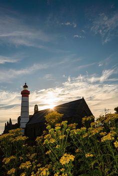 Sénéçon de Saint Mathieu | Flickr - Photo Sharing!