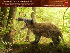 Deinogalerix koenigswaldi by RomanYevseyev on DeviantArt