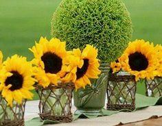 Topiary & Sunflowers