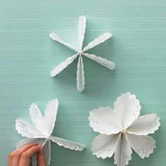 fiori da sottotorta