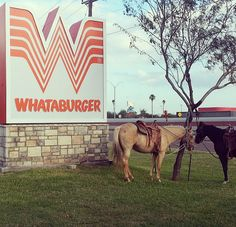 Horses are allowed in Whatburger parking lots and drive trough's.  23 Things You Didn't Know About Whataburger
