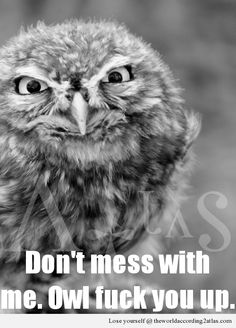 Grumpy Owl is Grumpy @Marissa Peck That's a lot of awesomeness.