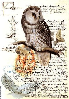 Just another owl on branch - with feather on background of an old letter