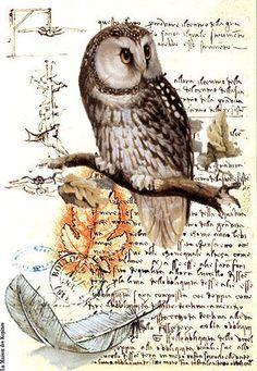 Owl on antique paper