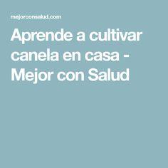 Aprende a cultivar canela en casa - Mejor con Salud #HuertaenCasa