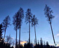 Wandern am Ossiacher See in Kärnten. Abendstimmung am Rückweg von der Burgherrenrunde Mountains, Nature, Travel, Woodland Forest, Naturaleza, Viajes, Destinations, Traveling, Trips