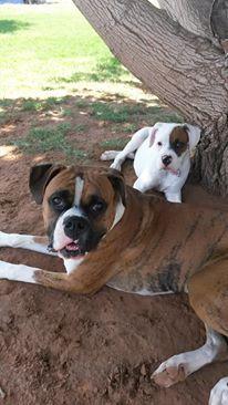 Harley & Zoey