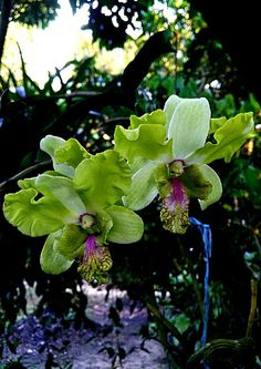 Orchids (Flowers and Plants) - Community - Google+