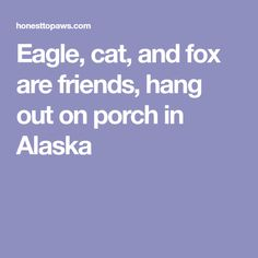 Eagle, cat, and fox are friends, hang out on porch in Alaska Awesome Stories, Go Outside, Hanging Out, Alaska, The Outsiders, Porch, Eagle, Fox, Friends