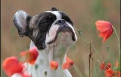 Ahh The Sweet Smell Of Spring Is Coming - Dogs & Animals ...
