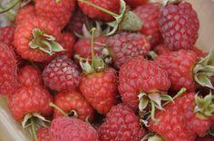 texel zelfpluktuin framboos raspberry
